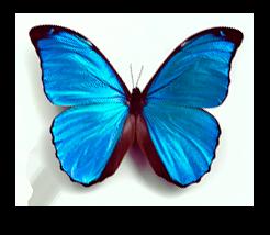 Våra tjänster Grafisk Design blå fjäril